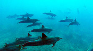 dolphins-near-bottom